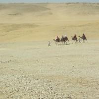 Caravan on the sands